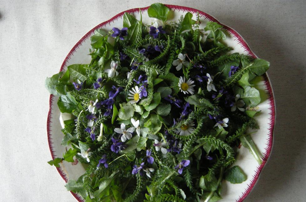 salade-de-cueillette-de-printemps